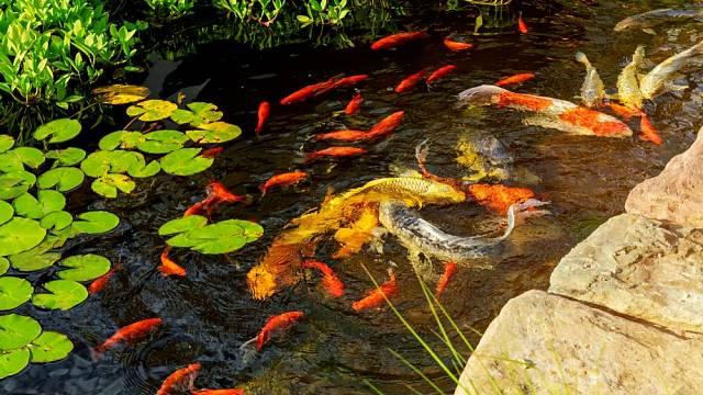 jezerni rybky