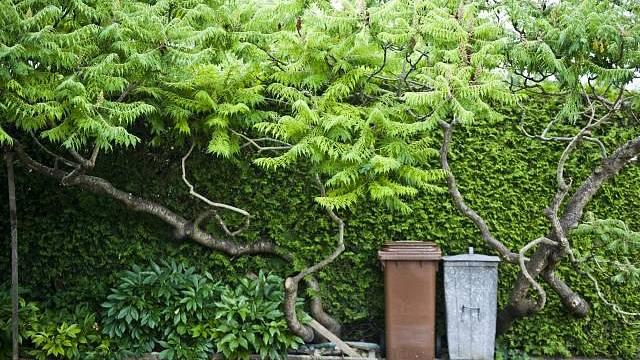 Biopopelnice pomůže s odpadem ze zahrady