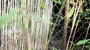 Bambusy nezmrzly 2