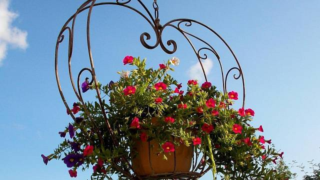 Květiny v závěsných koších