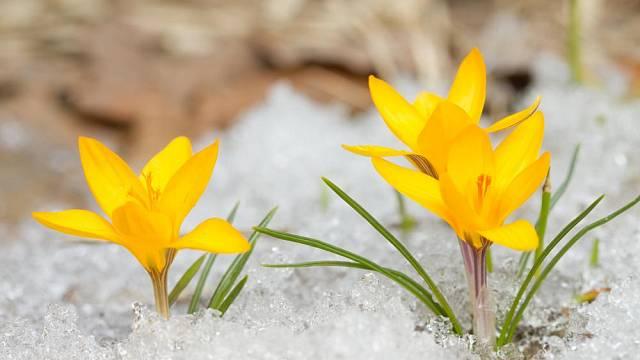 zimni zahrada
