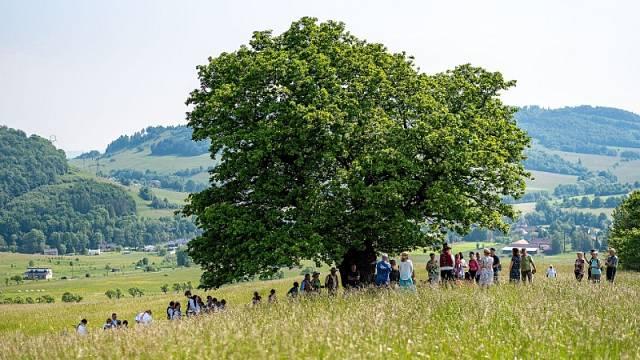 Druhé místo v anketě Strom roku obsadil dub letní z Kozlovic.