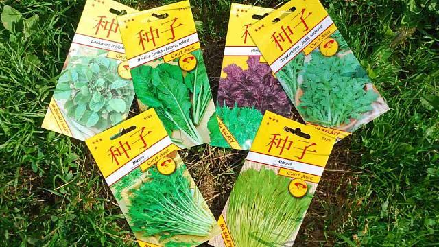 Výběr salátů, které nyní můžete pěstovat