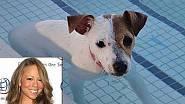 Oblíbený pes Maria Care, Jack Russell teriér jménem Jill E. Beans.