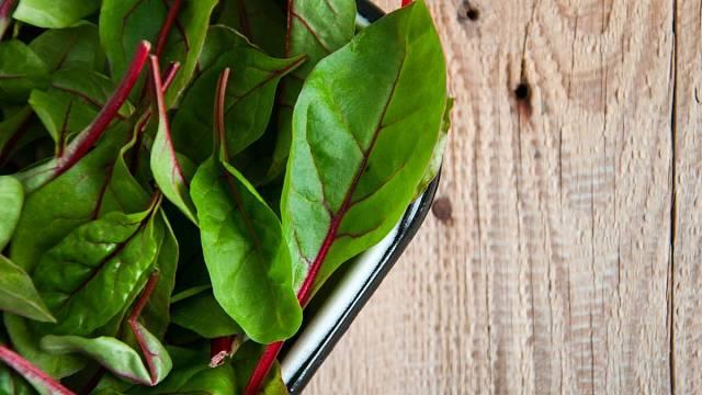 Mladé listy mangoldu