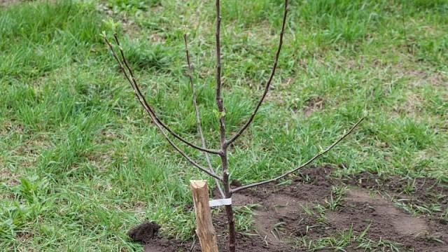 Chránit se musí především kořeny nově vysazených stromů
