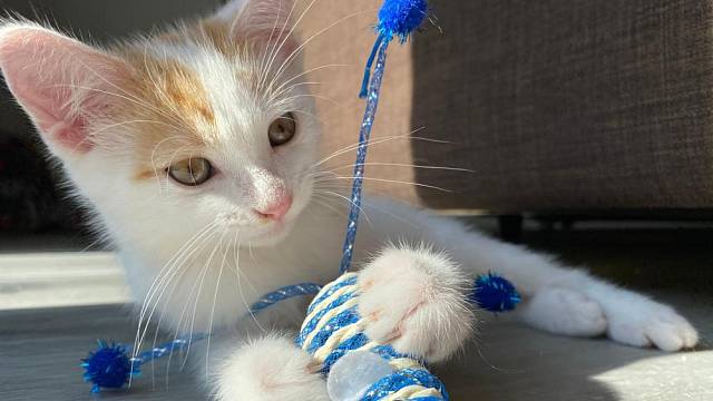 Kočky si hraním trénují svůj lovecký půd a postřeh.