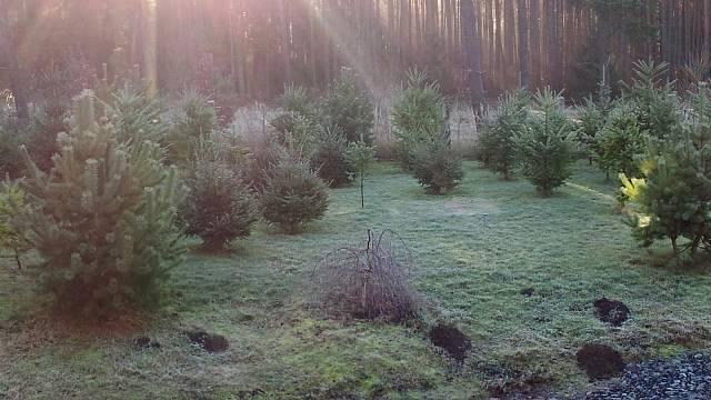 Tady bude jednou les. Králův les