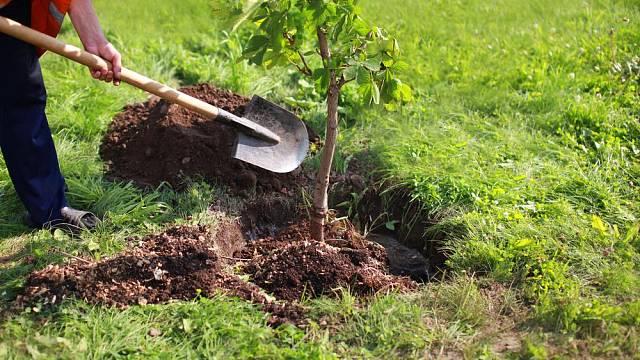 Září v zahradě  - čas setí a sázení, ale i příprav na zimu