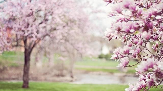 Na jaře je vzahradním jezírku vyšší množství fosforu
