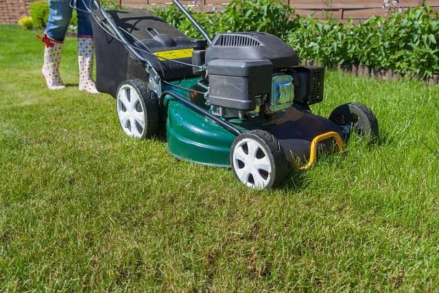 Jako prevence před plísní sněžnou se doporučuje trávník posekat.