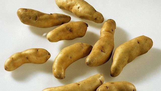 Keřkovské rohlíčky: nejlepší odrůda brambor na vánoční salát