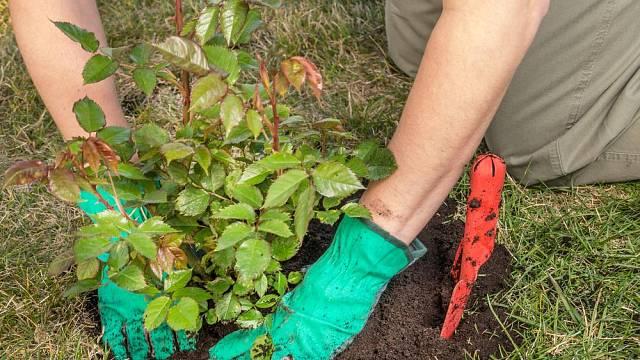 Říjen v zahradě – čas mulčování, rytí a příprav záhonů na příští rok