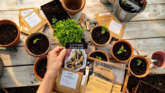 Semínka původních odrůd od Culina Botanica.