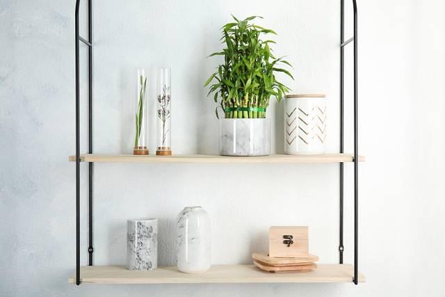 Mezi rostliny, které můžete pěstovat i v koupelně, patří i nenáročný a vitální bambus.