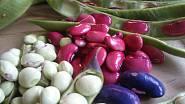 Fazolová zrna různých barev