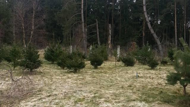 Naše lesní školka