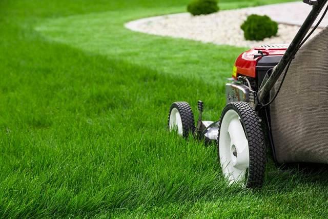 Prvním krokem je posekání trávníku na délku přibližně 5 cm.