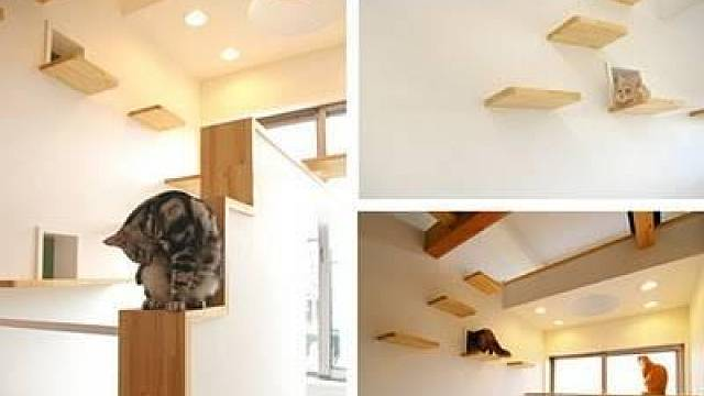 Dům je vybaven řadou vzdušných lávek, po kterých kočky mohou pohodlně přecházet.