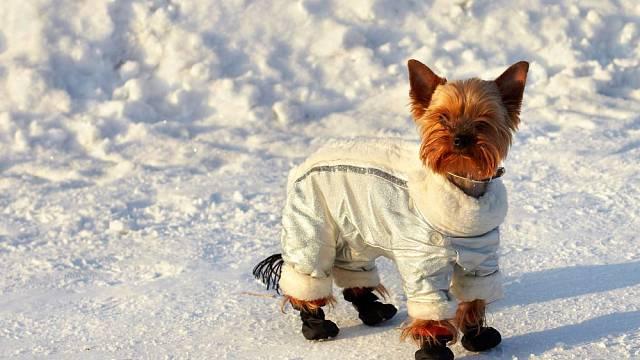 Pes v oblečku