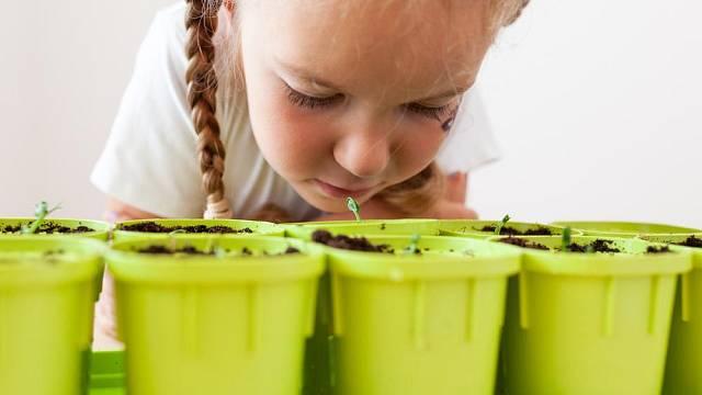 Domácí předpěstování rostlin