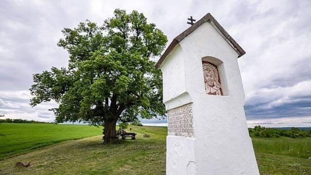 Nebo lípu pod Holým kopcem, na polní cestě Bohdalice-Manerov. Stejně jako ta Běleňská se letos dostala do finále ankety Strom roku.