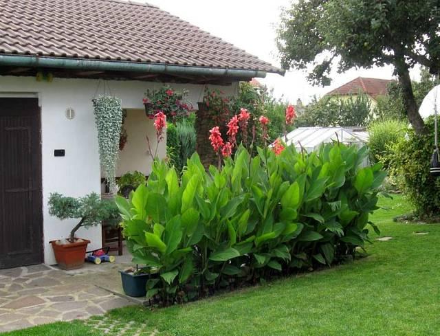 Zahrada plná květin - Bohaté a kvetoucí kany jsou ozdobou každé zahrady