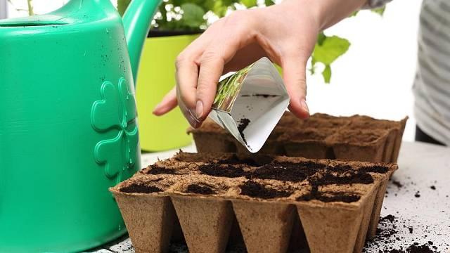 Menší semínka se zpravidla sejí po několika, protože ne všechna vzejdou. Pak se vyjednotí.