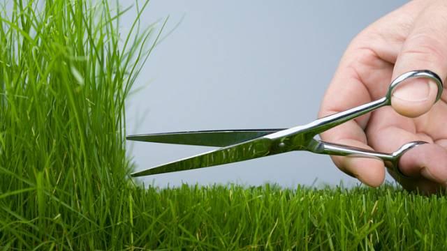 Co s posekanou trávou 2
