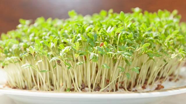 podzimni salaty