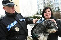 """MONTY má podle policejní čtečky svůj čip v nejlepším pořádku. """"Náš pes má čip už tři roky, téměř od narození. Byl už očipován, když jsme si ho pořídili,"""" prozradila Deníku při policejní kontrole čipu majitelka psa Helena Rážová."""