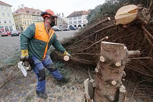 Kácení vánočního stromu v Litoměřicích