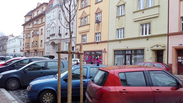 Stromům v Palachově ulici se bude hůře dýchat.