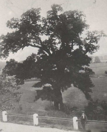 PSAL SE ROK 1936.Tehdy pět set let starý dub byl ještě vplné síle. Takto jej na fotografii zachytil Hasičský sbor vDolánkách.