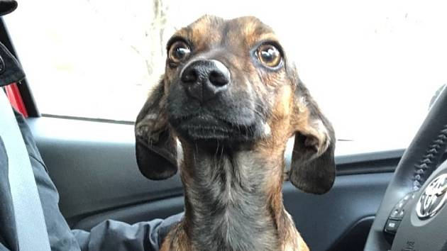 Nalezený pes.