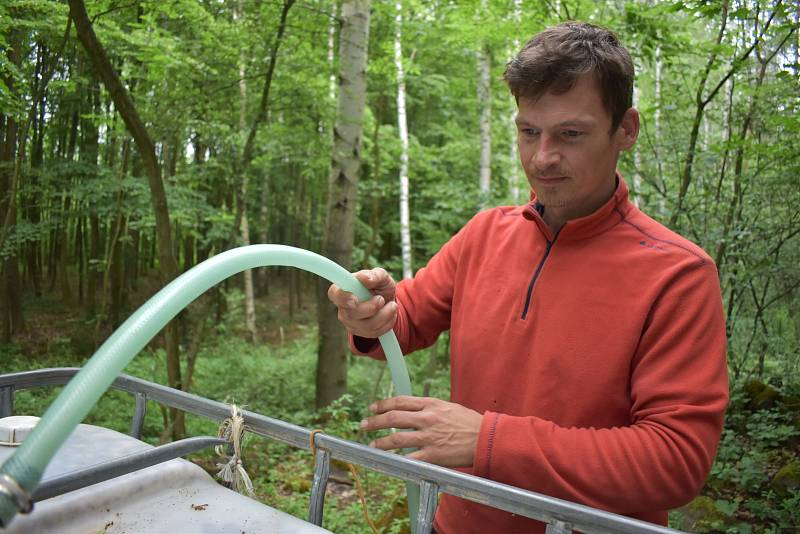 Ajťák David Vedra pase ovce pod Košťálovem, vodu k nim dostává systémem hadic