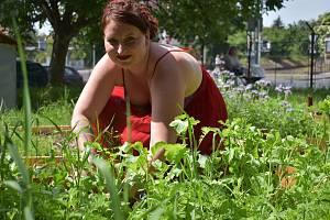 V litoměřické komunitní zahradě se lidé činí.
