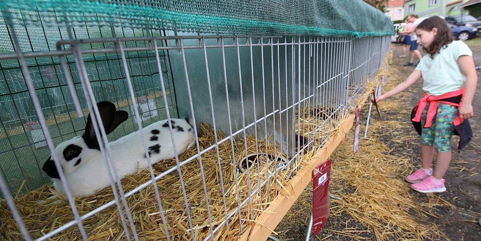 Tradiční výstava domácího zvířectva v Žitenicích na Litoměřicku.