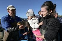 V sobotu proběhl výlov rybníka v Třebušíně. Na talíři ryby neskončí, pustili je do Labe i pro další příznivce volných chvil s prutem.