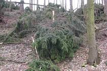 Výsledek řádení Emmy v lesích na Litoměřicku.