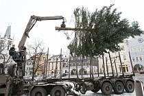 Instalace vánočního stromu na Mírovém náměstí v Litoměřicích.