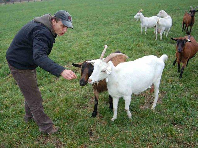 Farmu v Držovicích nedaleko Úštěku navštěvuje obzvláště v letních měsících mnoho návštěvníků. Jedním z nich, který si přijel prohlédnout kozy bílé, hnědé i pýchu místní farmy – kozy búrské, byl i Pavel Groh z Litoměřic.
