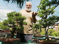 NA SVÉ ZAHRADĚ v Poplzích má Karel Chramosta velkou sbírku bonsají. Většinu jeho čtyřicetileté práce ale poničily kroupy, které se na Libochovicko snesly před měsícem. Borovice a buk na snímku v té době byly na výstavě v trojské botanické zahradě.