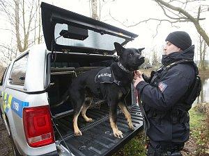Policejní psi, ilustrační fotografie
