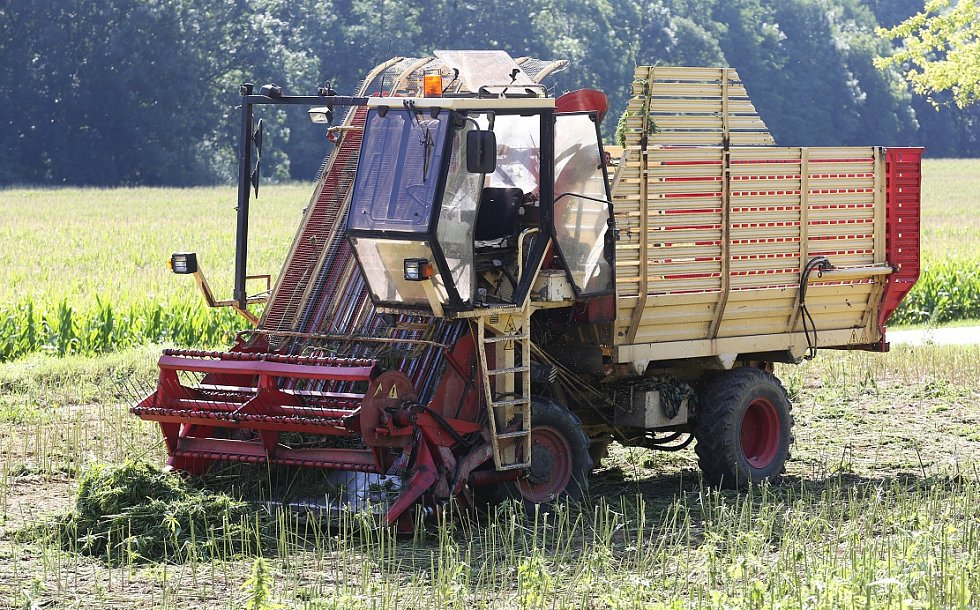 SKLIZEŇ probíhá tento týden v okolí Vrutice. Konopí tu pěstují na zhruba šedesáti hektarech.