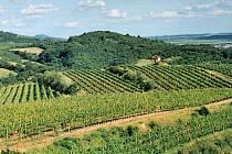 Žernosecké vinice.
