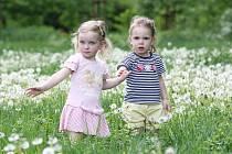 BUDOU MÍT ALERGII? Děti stojí ve vysoké trávě s odkvetlými pampeliškami v centru Lovosic, v parku Osmička. Ten ještě včera dopoledne nebyl zcela posekán. Aktuálně jsou alergeny právě travní pyly. Ty se díky větru dostanou i do otevřených oken domů.