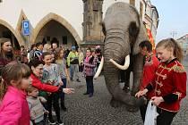 Po litoměřickém náměstí se procházel slon