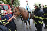 Hasiči cvičili v Terezíně vyprošťování s živým koněm