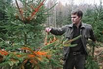 Lesníci v těchto dnech obcházejí mladé porosty, které by zloděje mohly lákat a esteticky je znehodnocují tak, aby nebyly tolik zajímavé.